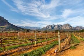 Sydafrika vässar sin vinprofil
