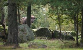 Vilt och välvårdat på Eriksberg