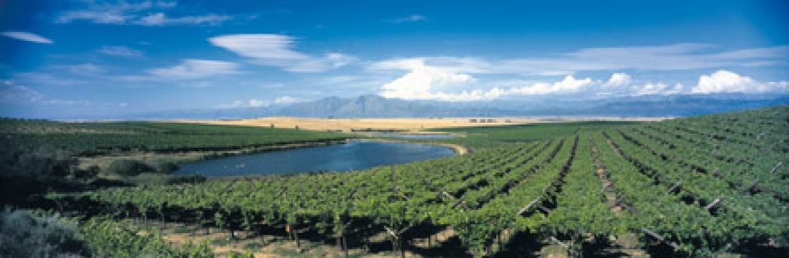 Stora viner från Sydafrika
